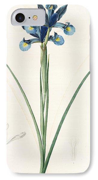 Iris Xiphium, Iris Xiphium Iris Xiphium Spanish Iris IPhone Case