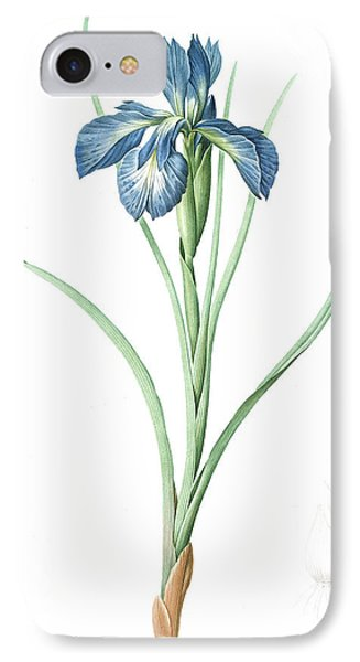 Iris Xyphioides, Iris Faux-xyphium English Iris IPhone Case
