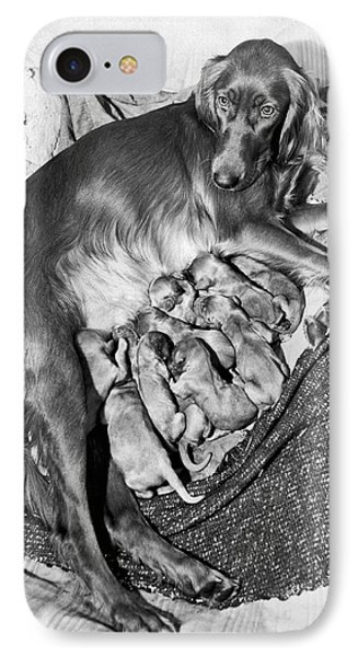 Irish Setter With 12 Puppies Phone Case by Underwood Archives