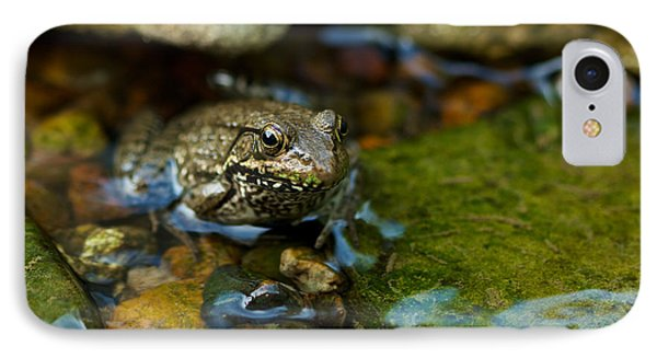 IPhone Case featuring the photograph Is There A Prince In There? - Frog On Rocks by Jane Eleanor Nicholas