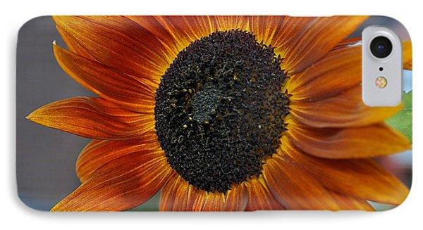Isabella Sun IPhone Case by Joseph Yarbrough