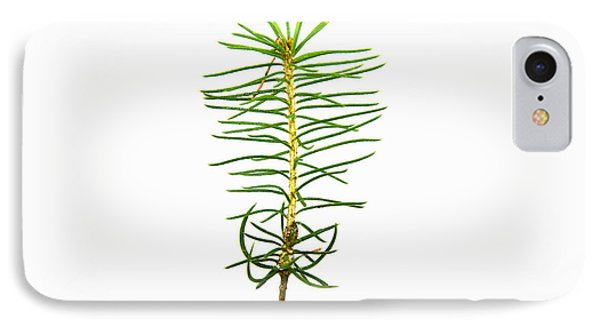 Isolated Spruce Seedling IPhone Case