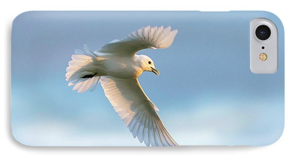 Ivory Gull In Flight IPhone Case