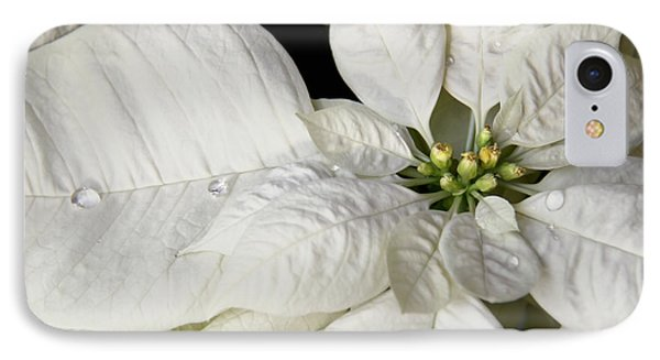 Ivory Poinsettia Christmas Flower Phone Case by Jennie Marie Schell