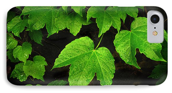 IPhone Case featuring the photograph Ivy by Tom Brickhouse