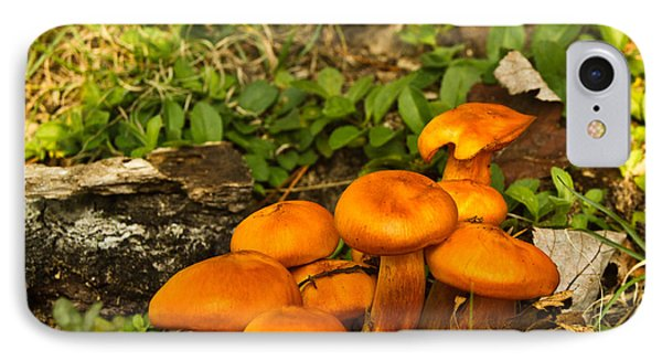 Jack Olantern Mushrooms 22 IPhone Case
