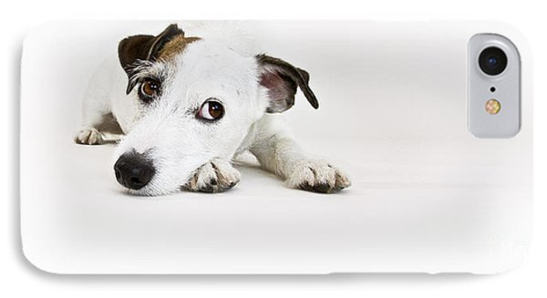 Jack Russell Terrier- Fine Art Photography By Holly Martin IPhone Case by Holly Martin