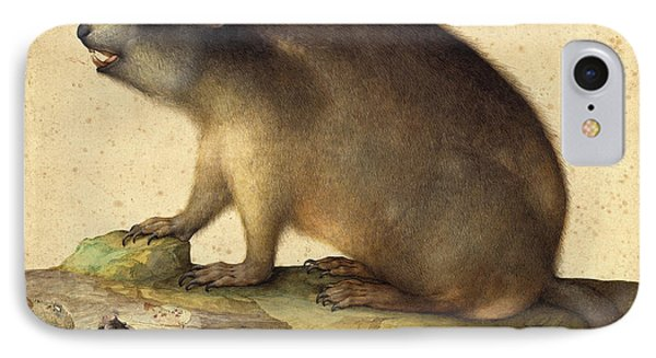 Jacopo Ligozzi Italian, 1547 - 1627, A Marmot With A Branch IPhone Case by Quint Lox