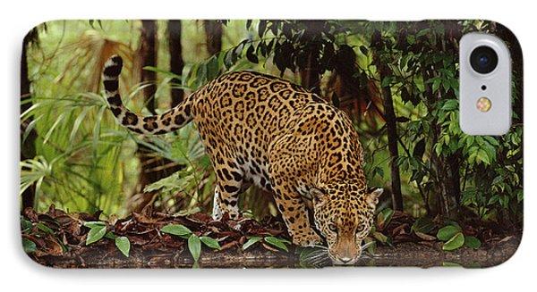 Jaguar Drinking Phone Case by Frans Lanting MINT Images