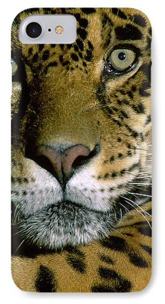 Jaguar Face (panthera Onca IPhone Case by Andres Morya Hinojosa