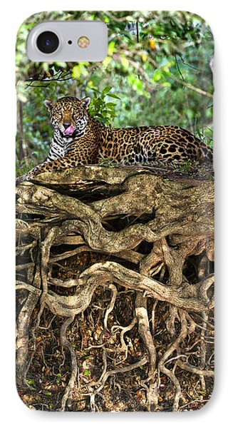 Jaguar Panthera Onca Resting IPhone Case by Panoramic Images