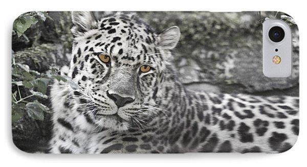 Jaguar IPhone Case by Rich Collins