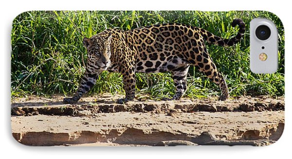 Jaguar River Walk IPhone Case by David Beebe