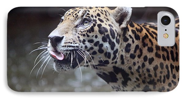 IPhone Case featuring the photograph Jaguar Sticking Out Tongue by Shoal Hollingsworth