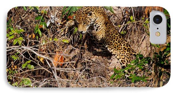 Jaguar Vs Caiman 2 IPhone Case by David Beebe