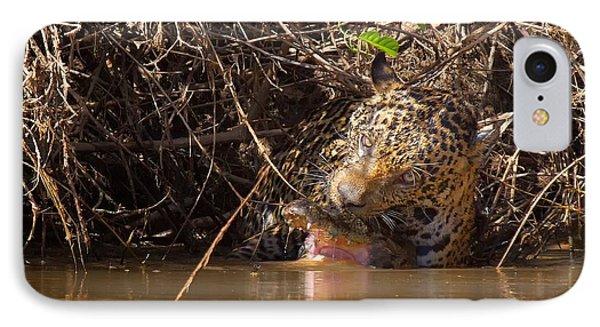 Jaguar Vs Caiman IPhone Case by David Beebe