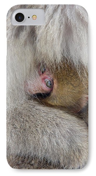 Japan, Jigokudani, Snow Monkey Baby IPhone Case