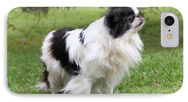 Japanese Chin - 2 IPhone Case by Rudy Umans