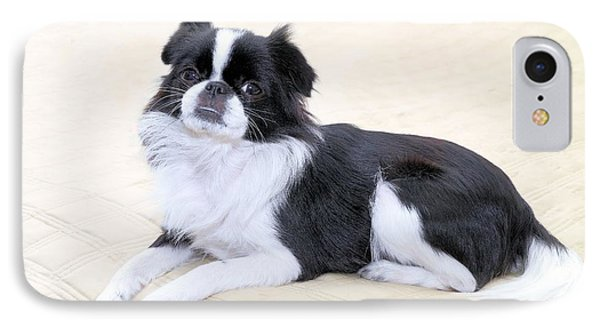 Japanese Chin - 5 IPhone Case by Rudy Umans