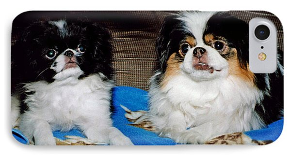 IPhone Case featuring the photograph Japanese Chin Dogs Looking Guilty by Jim Fitzpatrick