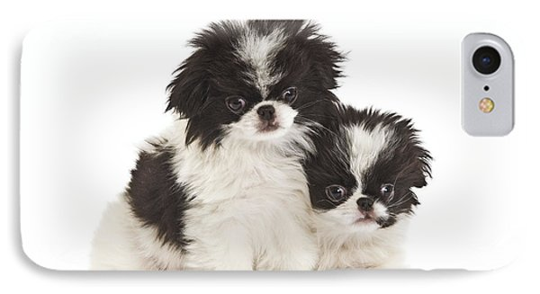 Japanese Chin Puppies IPhone Case by Jean-Michel Labat