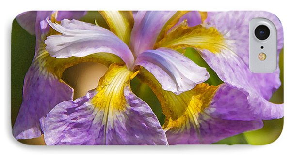 Japanese Iris In Dry Brush IPhone Case by Susan Crossman Buscho