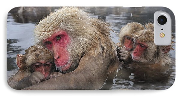 Japanese Macaque Grooming Mother IPhone Case