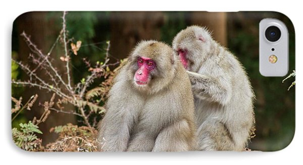 Japanese Macaque (macaca Fuscata) IPhone Case by Photostock-israel
