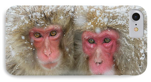 Japanese Macaques IPhone Case by Dr P. Marazzi