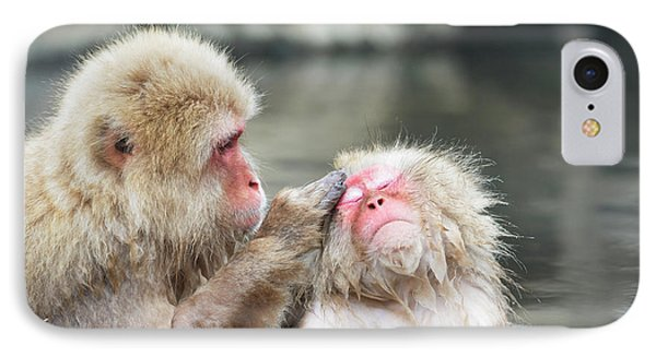 Japanese Macaques Grooming IPhone Case by Dr P. Marazzi