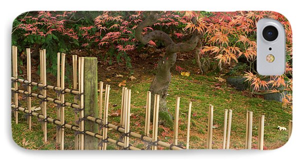 Japanese Maple, Acer Palmatum, In Fall IPhone Case
