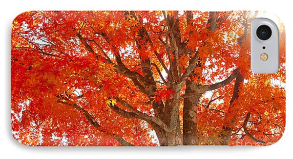 Japanese Maple IPhone Case by Aiolos Greek Collections