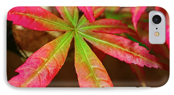IPhone Case featuring the photograph Japanese Maple by Kara  Stewart