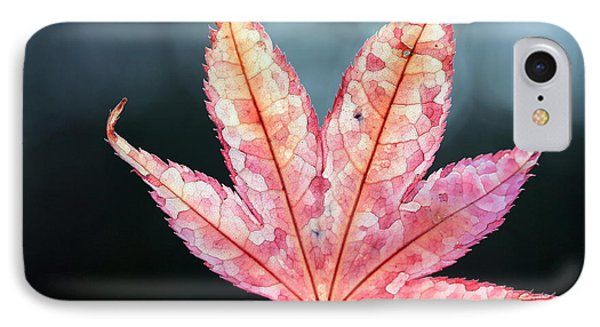 IPhone Case featuring the photograph Japanese Maple Leaf - 1 by Kenny Glotfelty