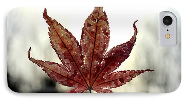 IPhone Case featuring the photograph Japanese Maple Leaf - 3 by Kenny Glotfelty