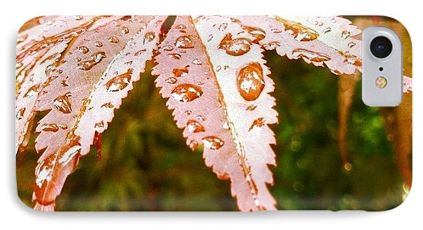 Japanese Maple Leaves IPhone Case by Marianna Mills