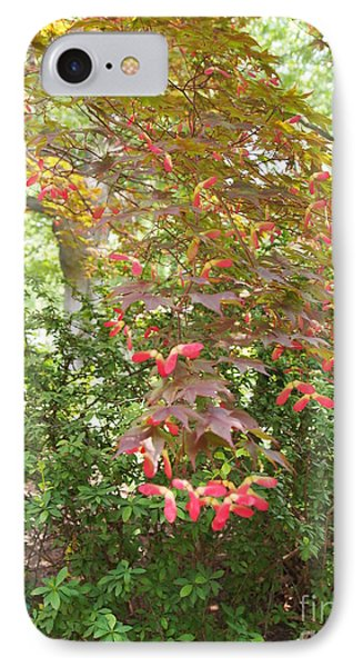 Japanese Maple Spring 3 IPhone Case by Nancy Kane Chapman