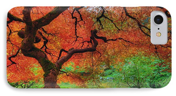 Japanese Maple Tree In Autumn IPhone Case