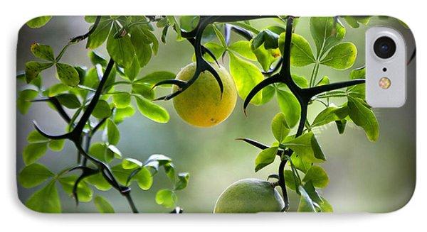 Japanese Orange Tree IPhone Case by Farol Tomson
