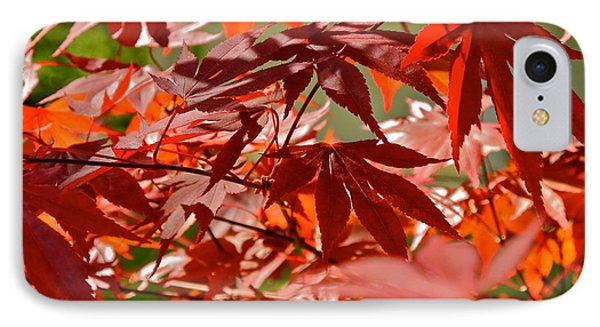 Japanese Red Leaf Maple IPhone Case by Kirsten Giving