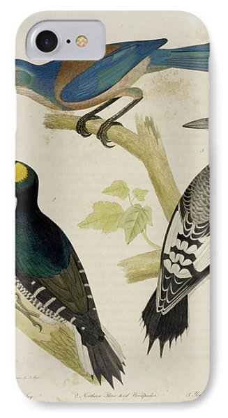 Jay And Woodpeckers IPhone Case by British Library