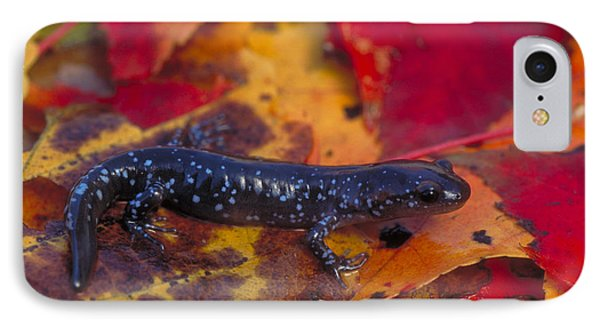 Jefferson Salamander IPhone Case by Paul J. Fusco