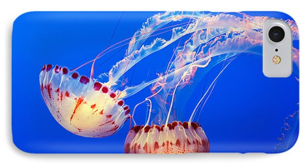 Jelly Dance - Large Jellyfish Atlantic Sea Nettle Chrysaora Quinquecirrha. IPhone Case by Jamie Pham