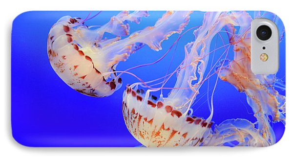 Jellyfish 9 Phone Case by Bob Christopher