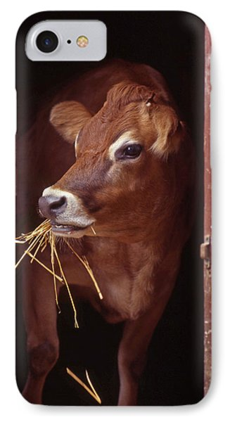 Jersey Cow IPhone Case by Skip Willits