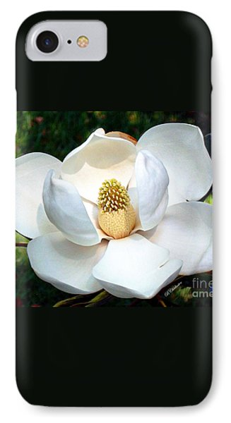 IPhone Case featuring the photograph John's Magnolia by Barbara Chichester