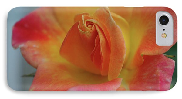 Joseph's Coat Climbing Rose IPhone Case by Robyn Stacey