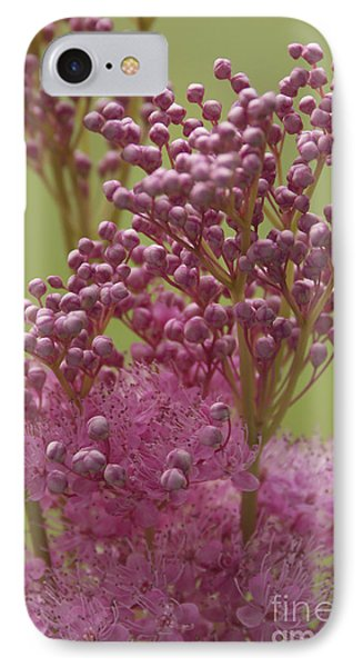 July Astilbe IPhone Case by Patrick Fennell