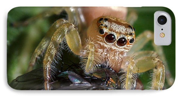 Jumping Spider 3 IPhone Case by Brad Grove