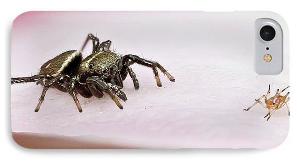Jumping Spider And Aphid IPhone Case